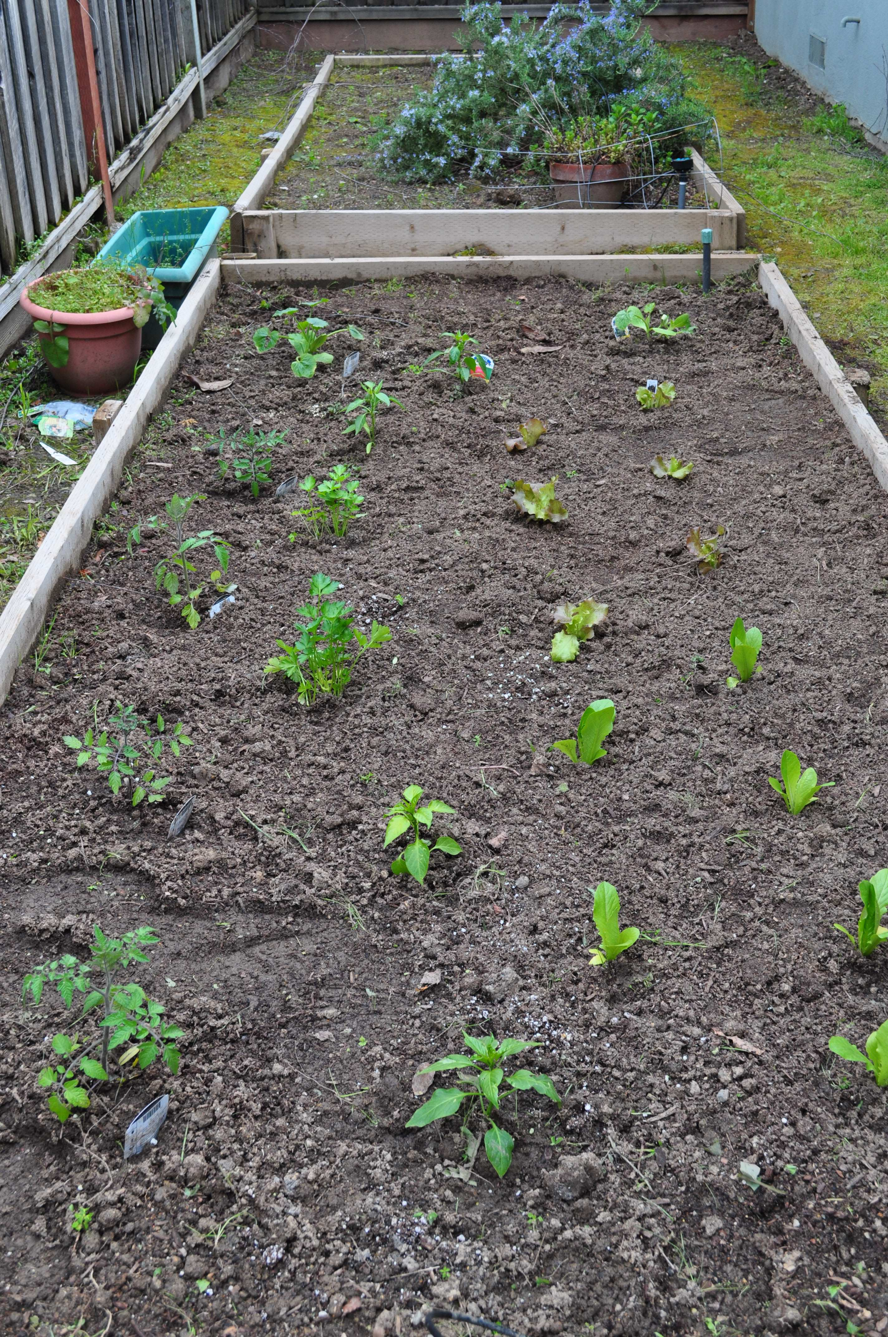 Tomatoes, parsely, lettuce, peppers, perilla leaves and zucchini