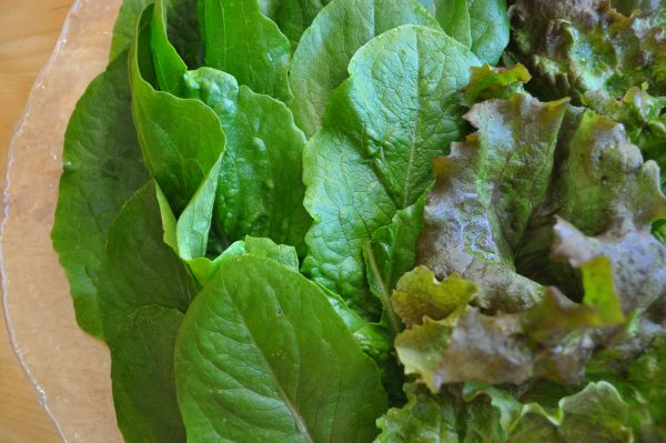 Romaine and red leaf lettuce - from my veg garden