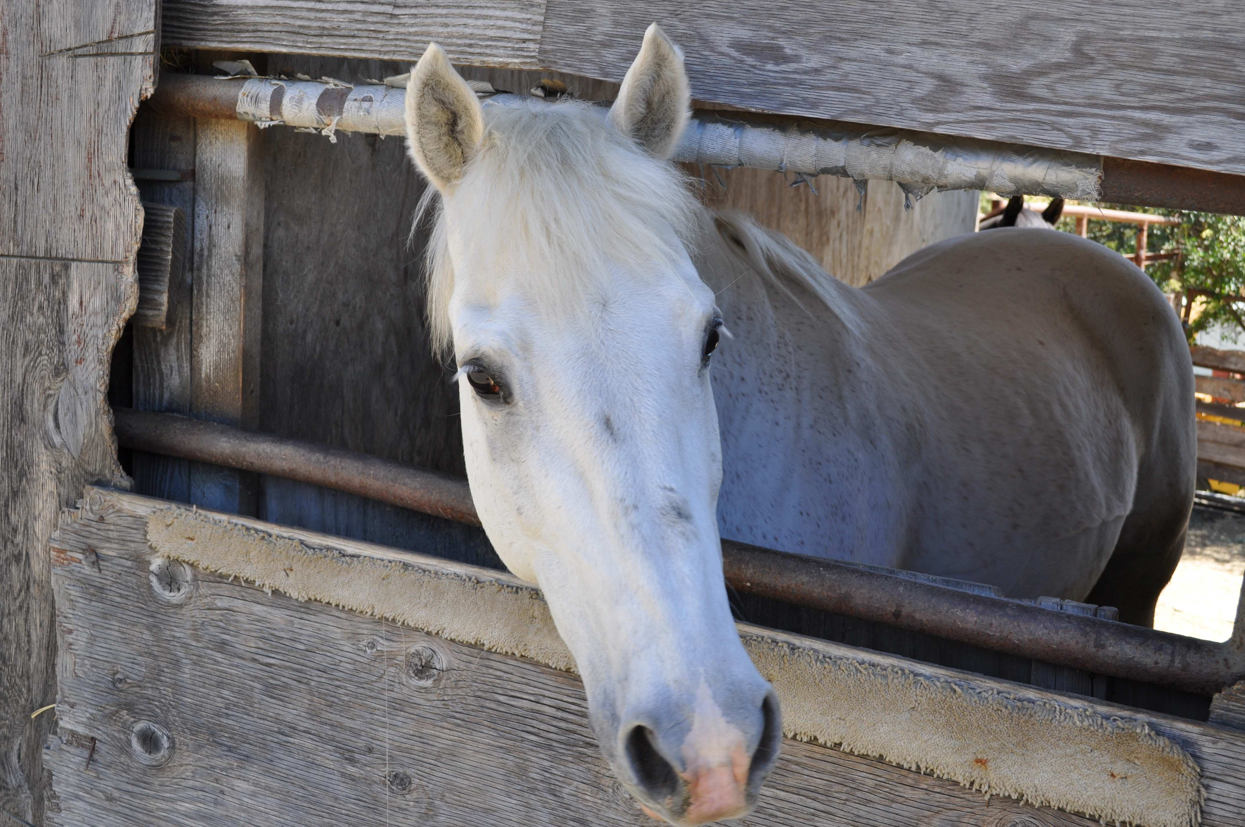 Picture of pepe, our horse