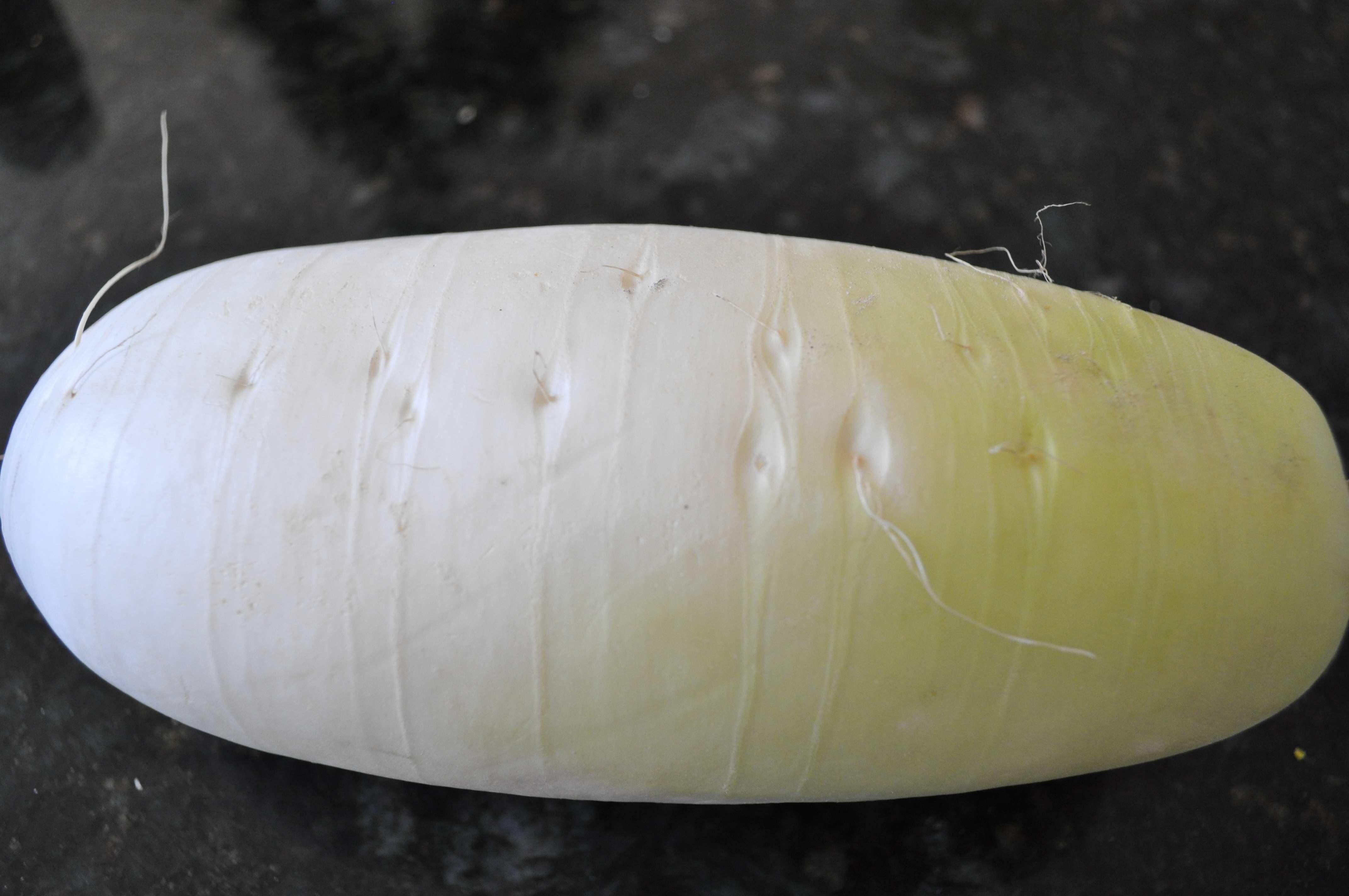 Korean Moo(radish)