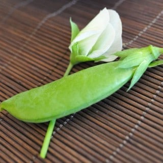 Snap Pea pod and flower