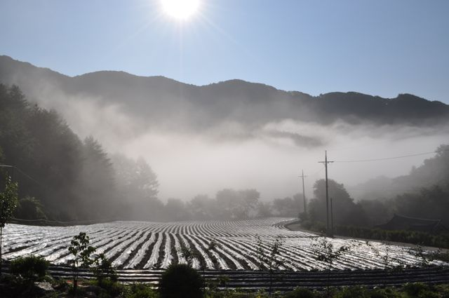 Early Morning in Kangwon Mountains