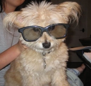 coco dog wearing 3D glasses