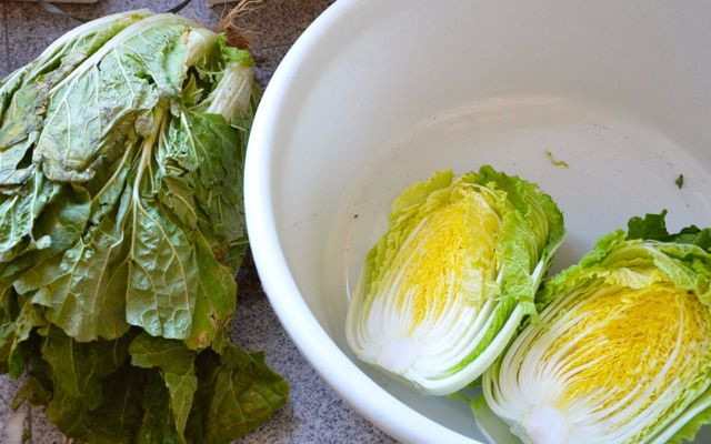 Cleaning cabbage for Kimjang kimchi