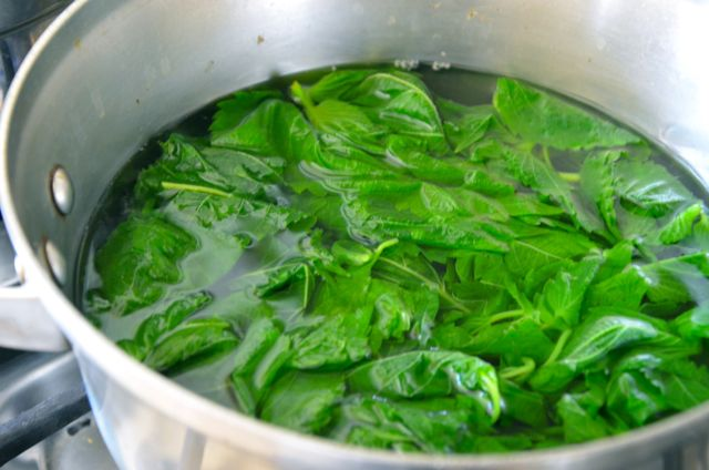 blanching perilla in pot