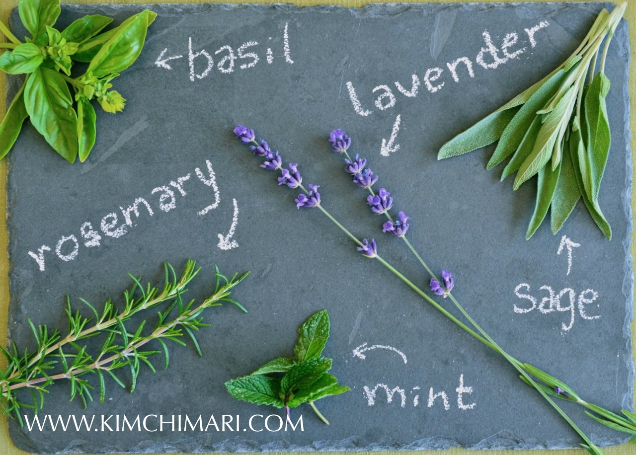 Chart of common garden herbs: rosemary, basil, lavender, mint, sage www.kimchimari.com