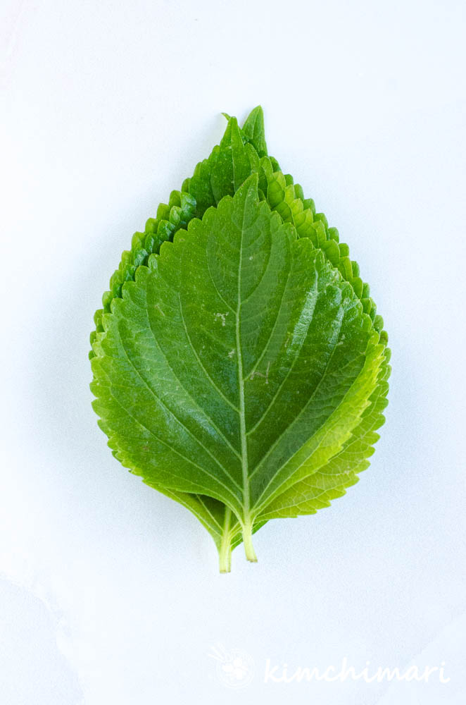 stack of perilla leaves on white background