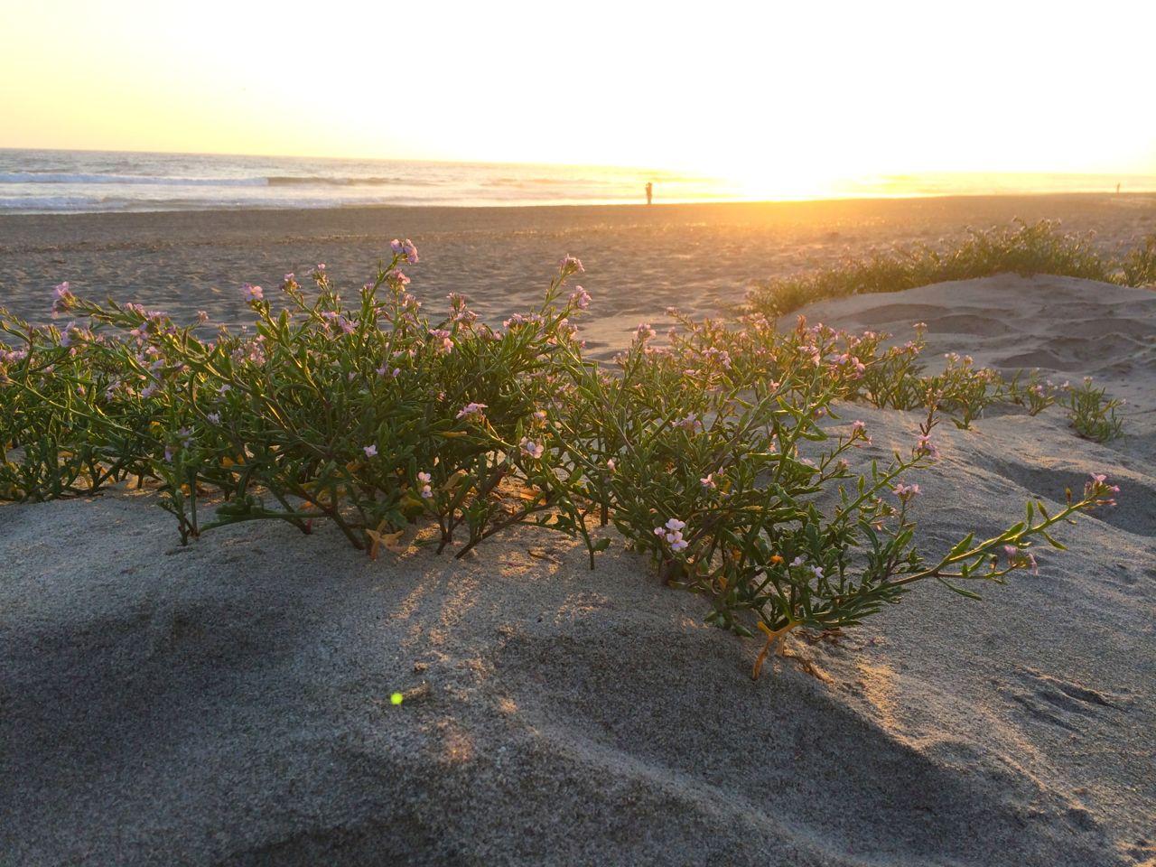 Sunset at Pajaro Dunes, Watsonville, California