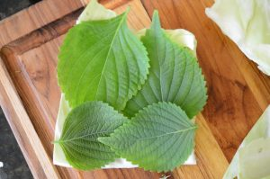 Perilla leaves layered with cabbage for Korean Perilla Cabbage Pickle