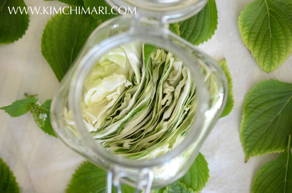 Perilla Cabbage layers in jar for Korean perilla cabbage pickle
