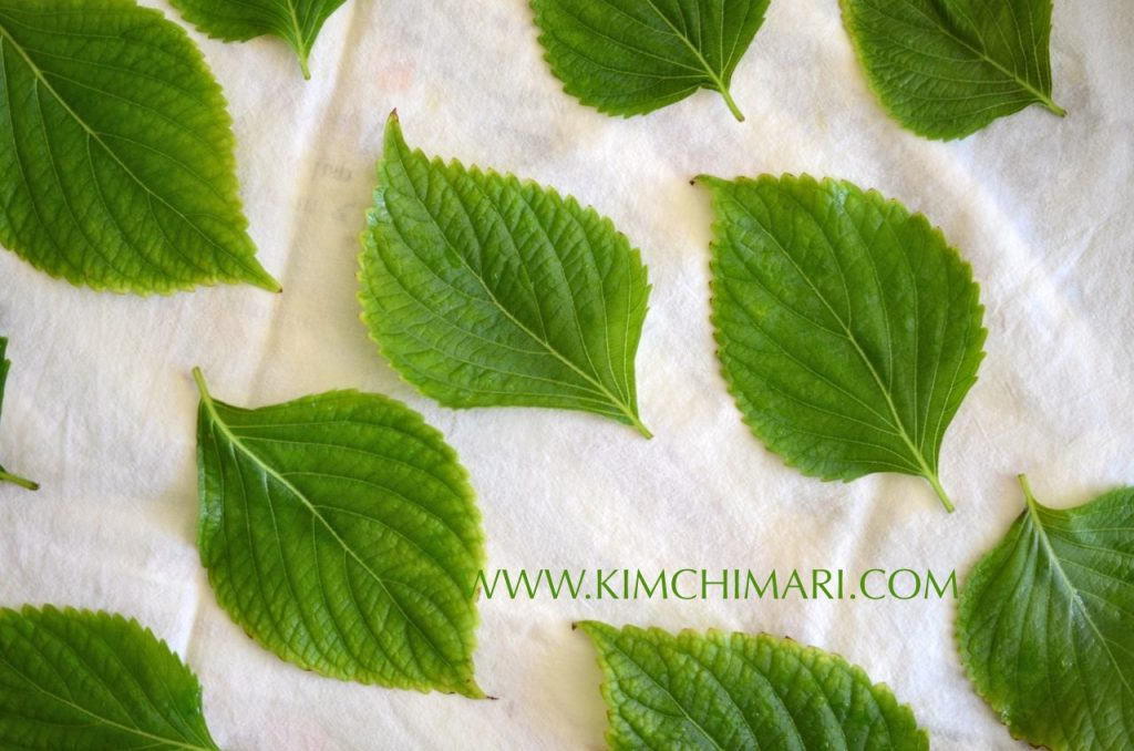 Perilla leaves drying on towel