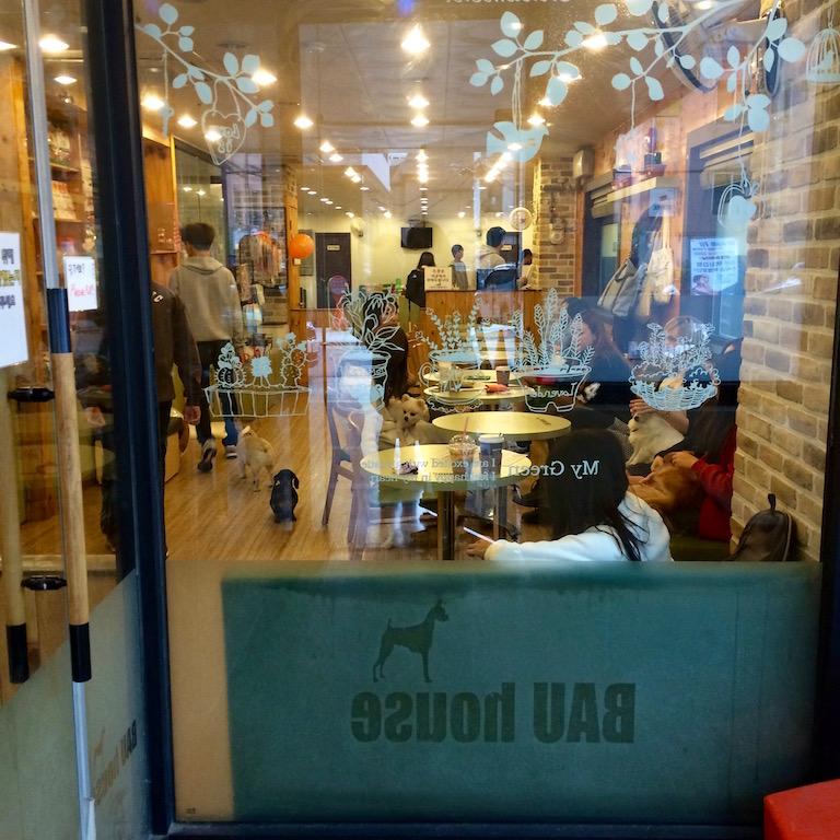 Bau House Dog Cafe near Hongik University, Seoul