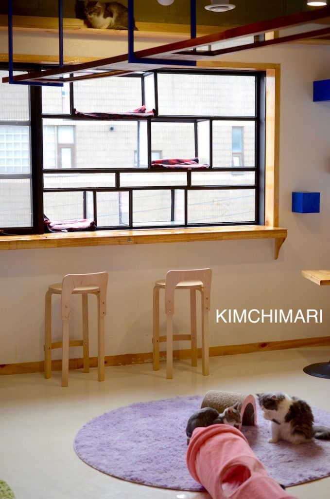 Cheongchun Cat Cafe near Hongik University, Seoul