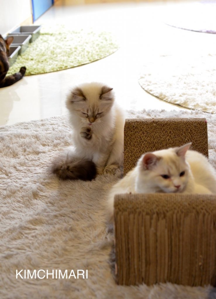 Cats chilling at Cat cafe in Seoul