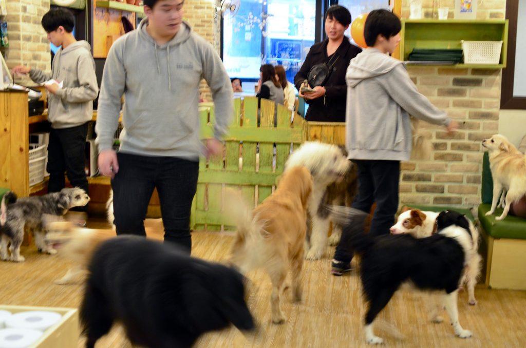 Dogs running around at Dog Cafe Bau House, Seoul