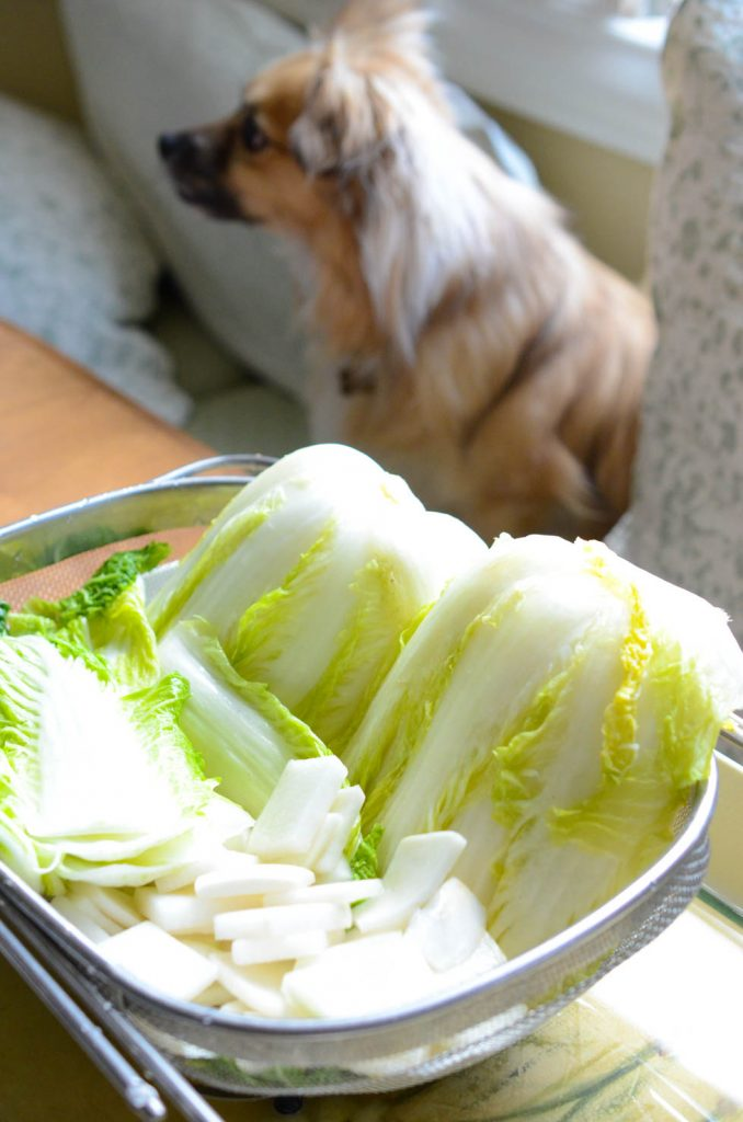 Brined cabbages and radish draining for kimchi