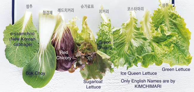 Korean Ssam Lettuce Wrap Varieties A