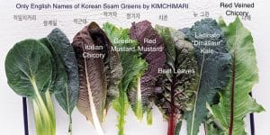 Korean Lettuce Wrap Ssam Varieties B