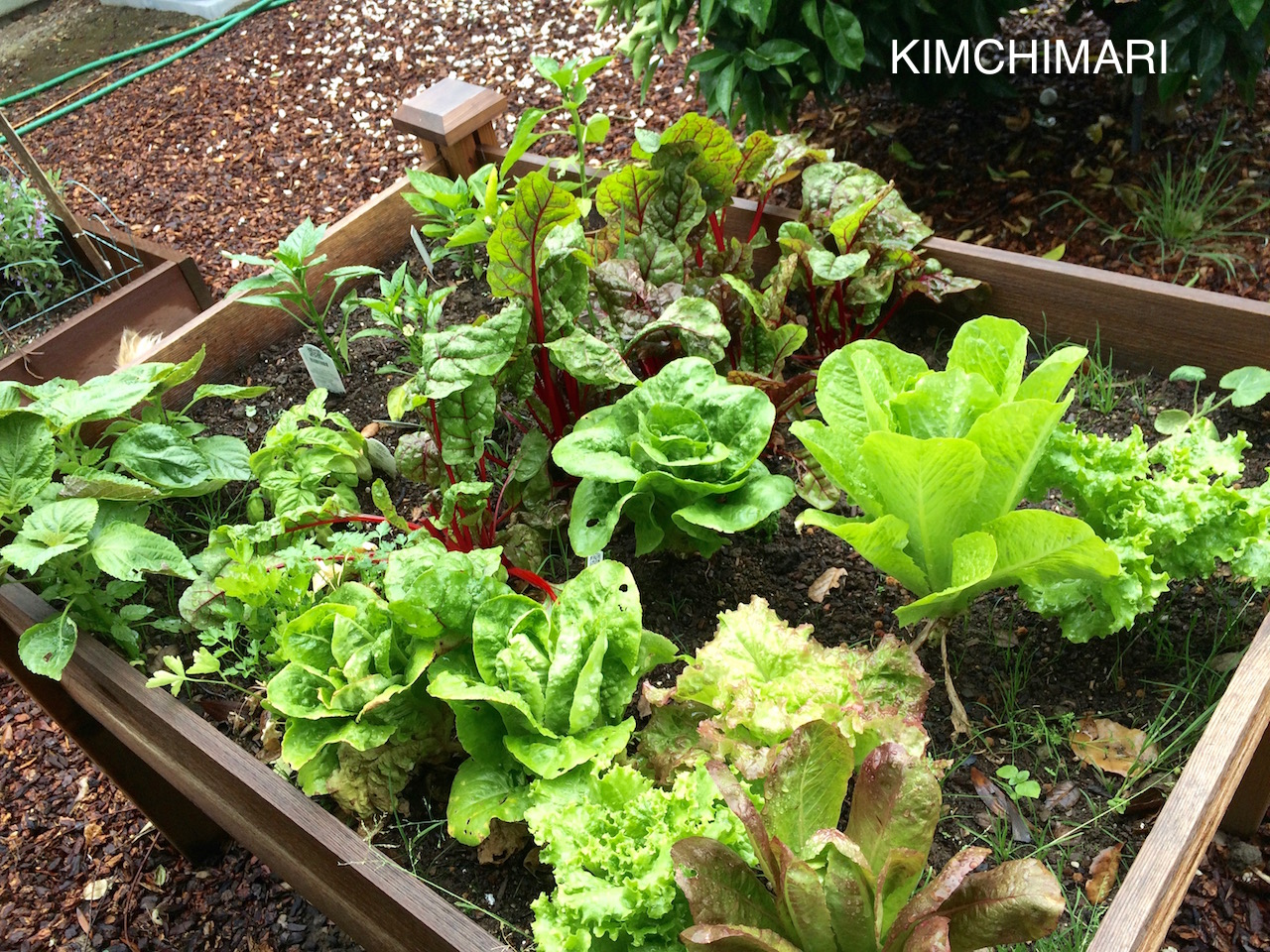 Types Of Greens For Korean Lettuce Wraps (Ssam)