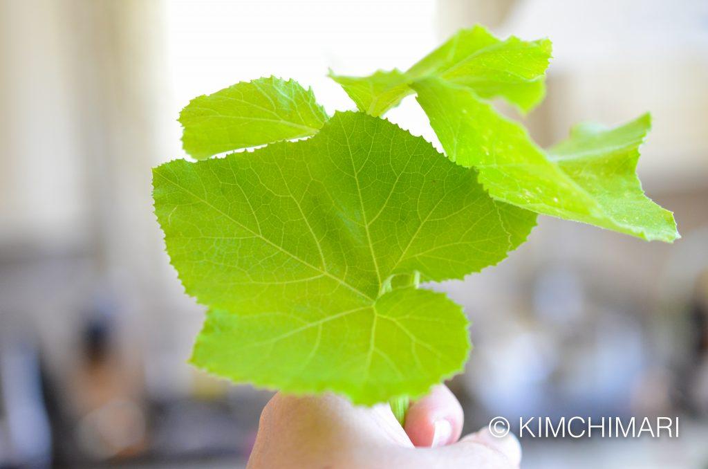 Young Korean Squash Leaves for Ssam (호박잎쌈 Hobaknip ssam)