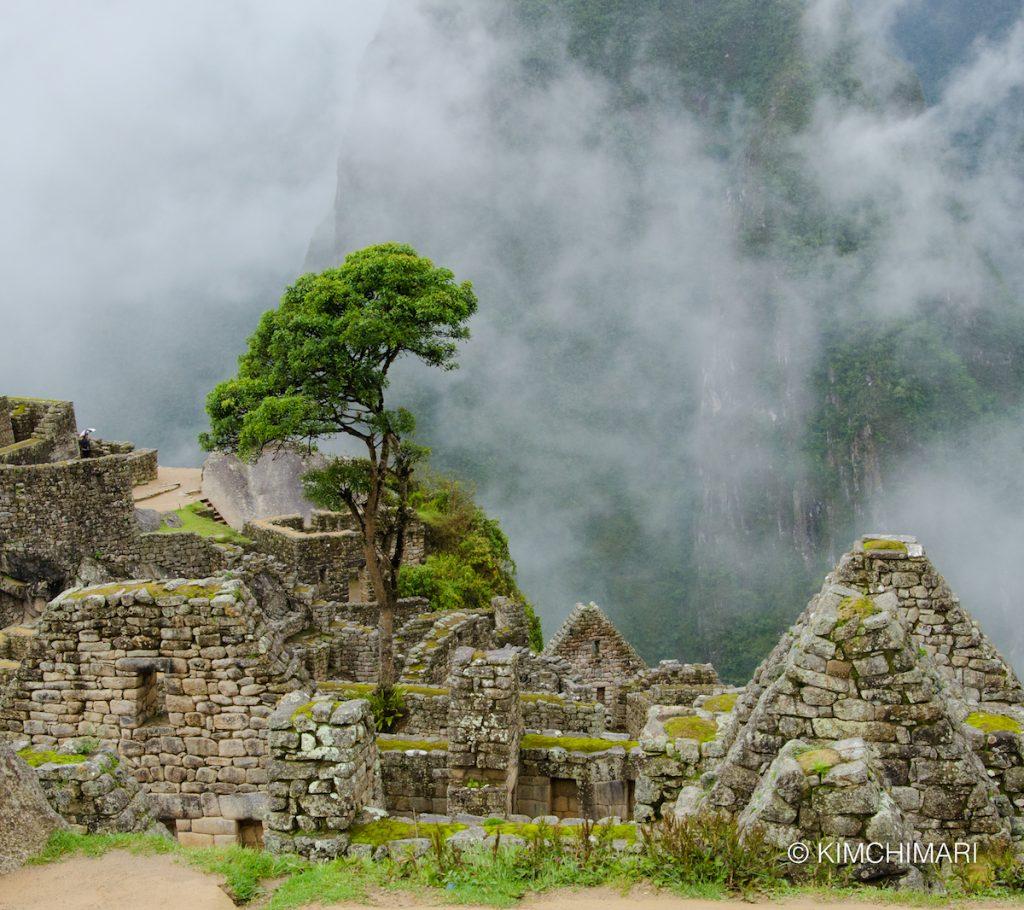 Tree in Machu Picchu, Peru