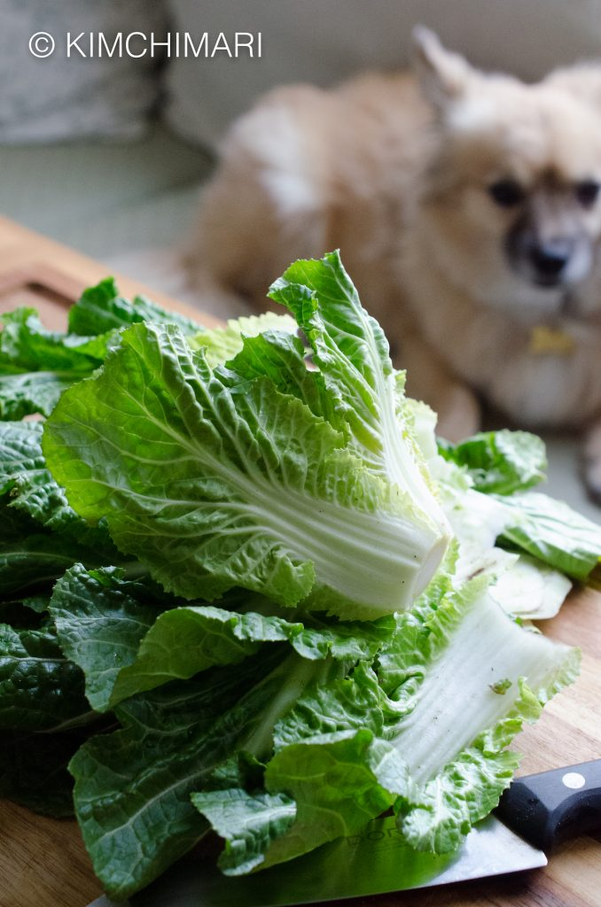 Korean Spring Cabbage cut for kimchi