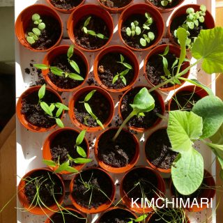Korean Vegetables Seedlings for Spring!