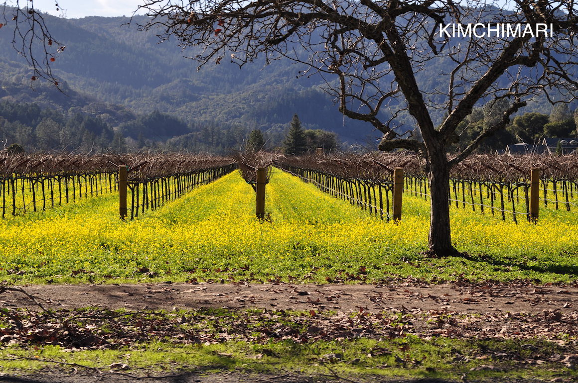 Napa Wineries in winter and early spring