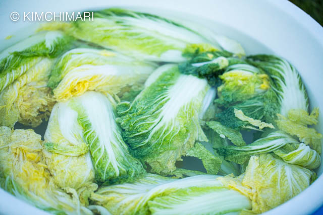 Rinsing salted cabbages in large bowl of water