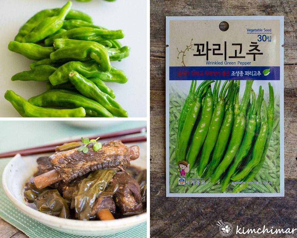 korean kkwari gochu shishito peppers seed packet and pork ribs made with peppers
