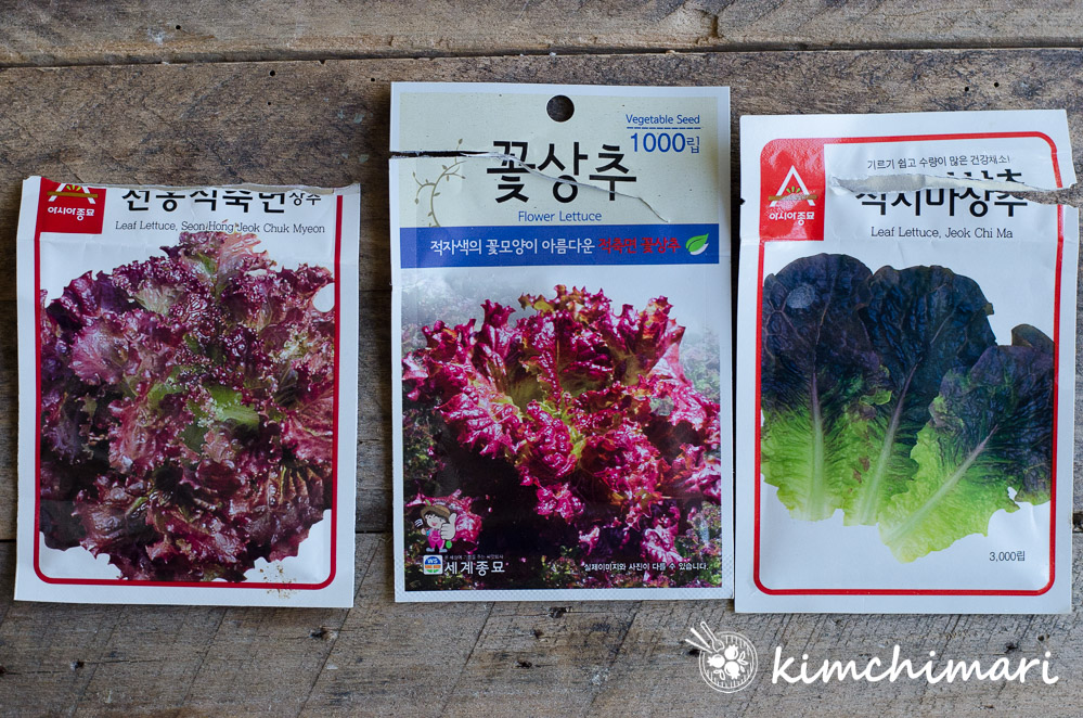 3 korean red leaf lettuce seed packets