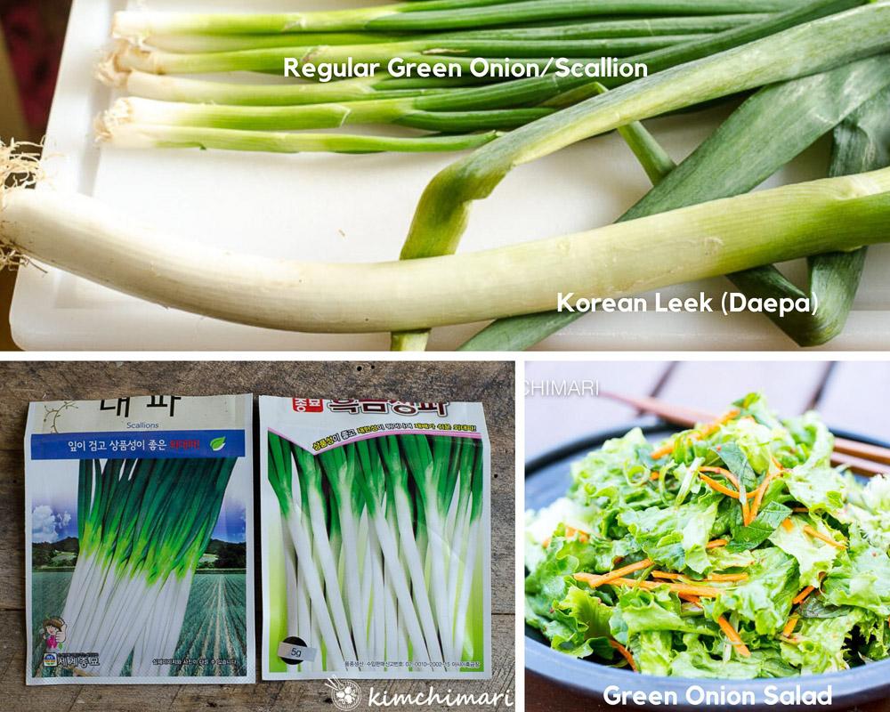 korean green onion daepa seed packets and comarison to regular scallions