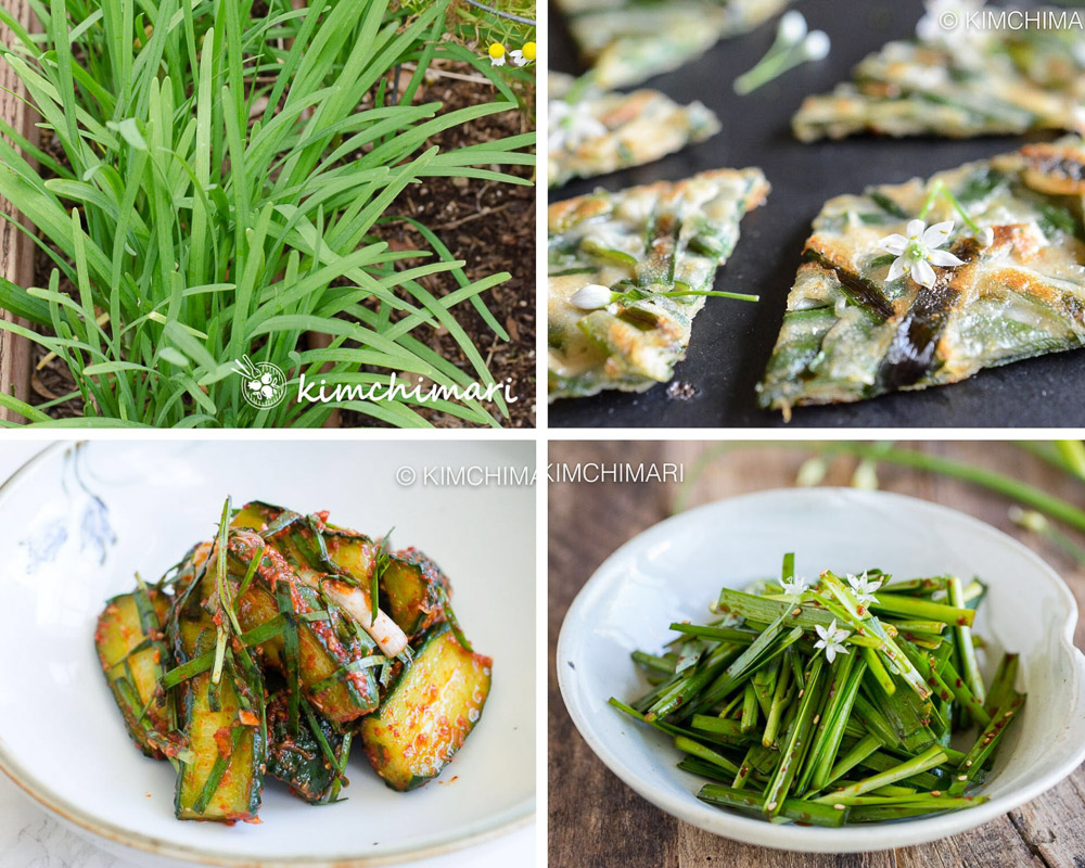 korean chive growing in garden and pics of cucumber kimchi, chive pancake and salad