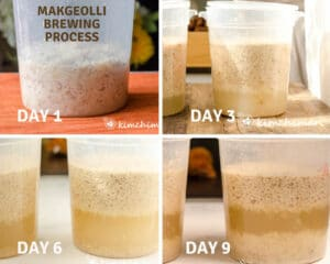 4 side view pic of makgeolli in container on day 1, 4, 6 and 9 with more liquid each day